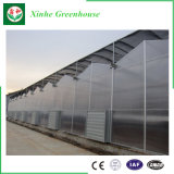 Intelligent Polycarbonate Greenhouse for Planting
