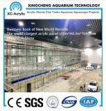 The World′s Largest Acrylic Panel 650 mm Aquarium