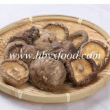 Lower Price Dried Shiitake/ Dried Smooth Shiitake Mushroom Vegetable