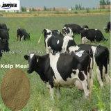 Seaweed Kelp Meal, Aniaml Feed Supplement