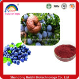 The Blueberry Powder Can Be Made From Granule Hot Sell