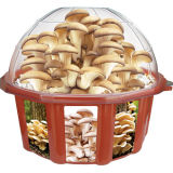 Dunecraft Grow Your Own Oyster Mushroom
