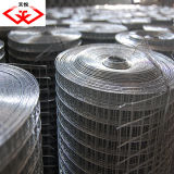 Electric Welded Wire Mesh (TYD-0103)