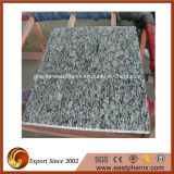 Chinese Spray White Granite for Wall Tile, Vanity Top
