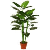"Artificial Plants Green Tree 125cm Taro with 7""Plastic Pot, 3 Stems, 27 Lvs"