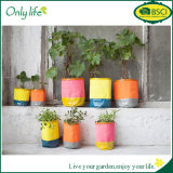 Onlylife Beautiful Mini Flower Grow Pot with Multi Size