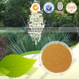 100% Natural Yellowish Powder Saponins /Yucca Schidigera Extract