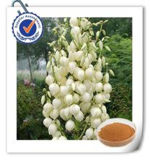 High Quality Pure Natural Yucca Extract Sarsaponin