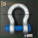 Galvanized Us Type Forged D Shackle