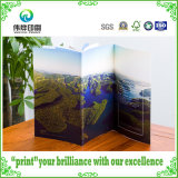 Beautiful Brochure Printing for Promotion