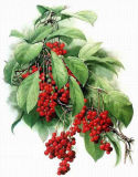 Schisandra Chinensis Extract Polyphenols, Schisandrin B, Schisandrin a