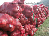 Fresh Purple Onion with Good Price and Quality