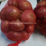 New Crop Onion From China
