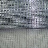Galvanized/ PVC Coated/ Stainless Steel/ Black Welded Wire Mesh