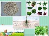 EDTA Zn / Ca / Fe / Mn / Mg / Cu Fertilizer