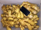 2016 Market Price for Ginger /Price of Fresh Ginger in China