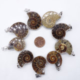 Natural Ammonite Conch Shell Pendant Charms