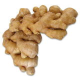 Ginger Extract, Goldenseal Root Extract and White Kidney Bean Extract
