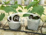 Hydroponic grow bag cultivation for cucumber