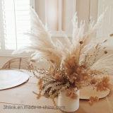 Bundle of Large Fluffy Dried Pampas Grass Decor/Dried Flower Wedding Design