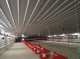 Cheap Chicken Equipment Poultry Feed