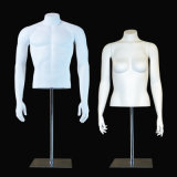 Male Female Torso with Stand