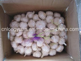 Pure White Garlic (5.0cm, 5.5cm, 6.0cm)