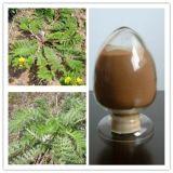 Discolor Cinquefoil Herb Extract Powder 4: 1 5: 1 10: 1 20: 1