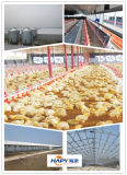 Light Steel Poultry Farm House with Full Set of Equipment