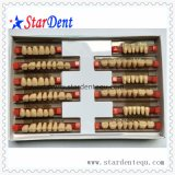 Three-Layer Synthetic Resin Teeth with Ce