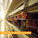 Automatic Poultry Equipment chicken raising system in Chicken Farms