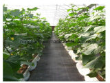 Agriculture Weed Anti Grass Fabric