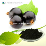 Natural Black Currant 25% Anthocyanins Soluble in Water