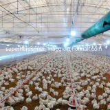 High Quality Automatic Poultry Farm Equipment for Broiler