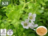 Factory Supply Bacopa Monnieri Extract 10% ~50% Bacopasides