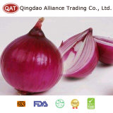 High Quality Purple Peeled Onion with Good Price
