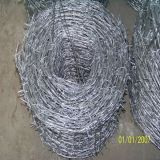 Top Quality Barbed Wire 12#X14# (DYWM9611212)