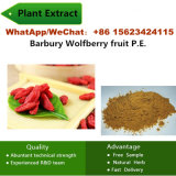 China Female Drug 50% 60% Chinabarbury Wolfberry Fruit P. E. Plant