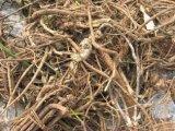 Vietnamese Sophora Root Extract