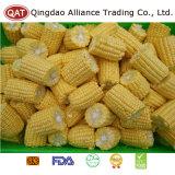 New Crop Frozen Sweet Corn Cobs with Good Price