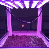 DC24V LED Plants Grow Light Modules with Ce Approved