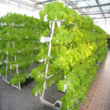 Commercial Greenhouse Hydroponic Growing Systems for Lettuce