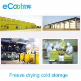 Customized Large Scale Freeze Drying Cold Warehouse and Equipment for Vegetables and Fruits