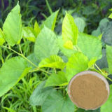 98% Mulberry Leaf Extract/1-Dnj