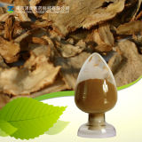 Natural Dong Quai Extract/ Angelica Root Extract