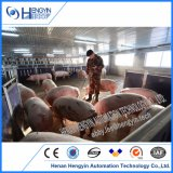 Turnkey Pig Farm Project Penning Feeding Drinking Ventilation System for Sale