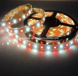 DC12V/DC24V 60LEDs/M 5050 RGBW LED Strip Light