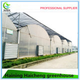 Hot Steel Tube Greenhouse Frame From China