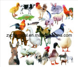 Sodium Humate, Water Solubility, Used in Aquaculture, Feed Stuff for Livestock and Fowls,