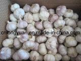 Loose Carton Packing Fresh White Garlic